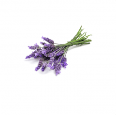 doTERRA Lavanda Lavandula angustifolia Óleo Essencial 5 ml